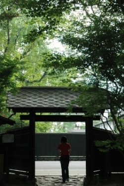 akita006.jpg