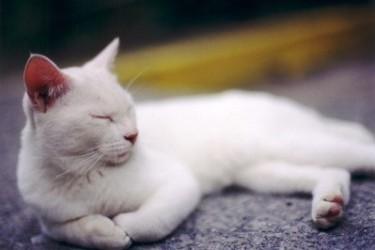 cat009.jpg