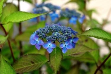 plant006.jpg