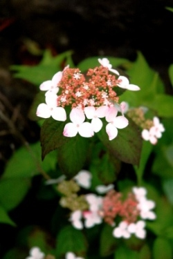 plant007.jpg
